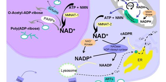 NAD-5
