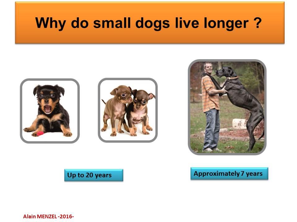 dogs-longer