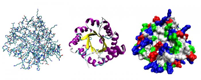 Proteinviews-1tim
