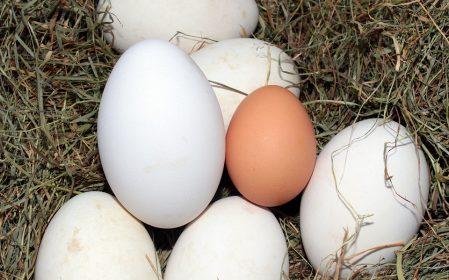 egg-1268339_960_720