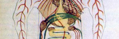 17th_century_Persian_digestive_system